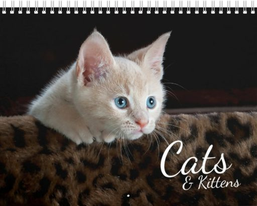 Cats and Kittens Photo Calendar