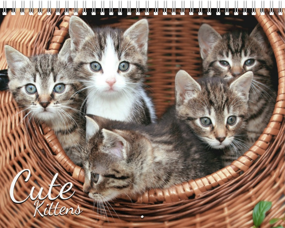 Cute Kittens Photo Wall Calendar